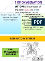 Respiratory Anatomy & Physiology