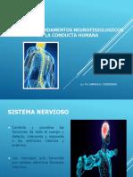 4-NEURONA-Sistema_nervioso (1).ppt