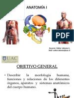 Clase Nc2b0 1 Anatomia i