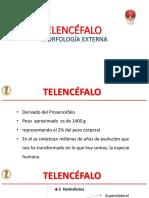 01. TELENCEFALO,.