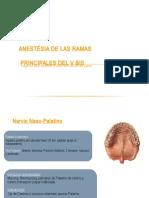anestesia y sus ramas