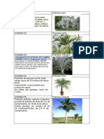 Ficha de Imagens Plantas