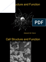 Cell Structure and Function.pdf
