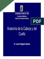 antomia_cabeza_y_cuello.pdf