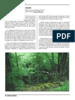 Magia de los Bosques.pdf