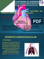 Fisiologia y Anatomia Del Aparato Cardiovascular