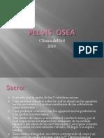 Pelvis Ósea II (Vale) (1)