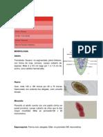 Fasciola hepática. Resumen