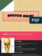 Region Nasal Anato