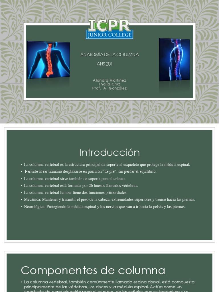 anatomia de la columna new
