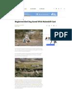 the dodo article greenland
