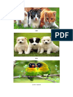 ANIMALS.docx