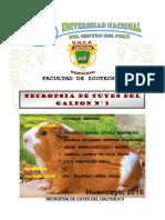 Necropsia de Los Cuyes Del Galpon n3