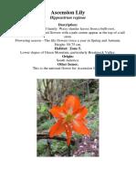 Ascension_Lily.pdf