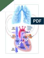 Si Tiene Insuficiencia Cardiaca