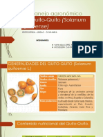 Manejo Agronómico de Quito-Quito (Solanum Quitoense