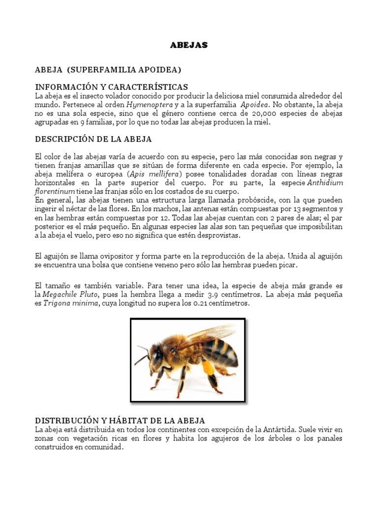 Moderno Anatomía De La Abeja De La Miel Foto - Imágenes de Anatomía ...