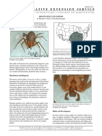 Brown Recluse Spider Michael
