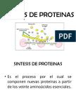 Sintesis de Proteinas IV