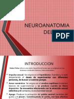 Neuroanatomia Del Amor 1