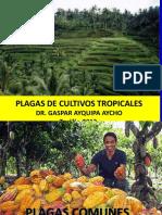 plagas de Cultivos Tropicales