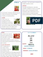 Diptico Plantas Medicinales de La Selva