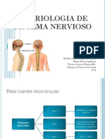 embriologiadesistemanervioso-101026172109-phpapp01