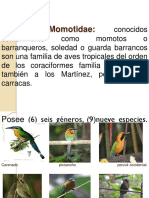 Familias Aves Silvestres 1