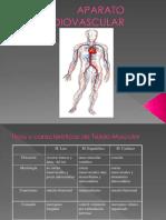 Clase Nº 04 Fisiología Cardiovascular