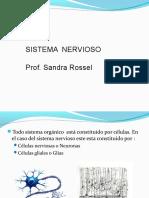 5 - Sistema Nervioso de 3ro