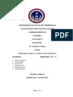Monografía Surcos y Circunvoluciones