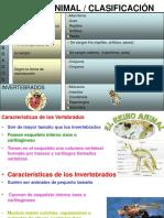 146_2_ANIMALES_CLASIFICACION[1] (1)
