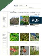 Arbustes Et Plantes de Bord de Mer de La Troisième Ligne - Hortimarine