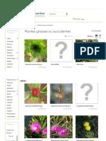 Les Plantes Grasses Ou Succulentes, Idéales en Pot Ou en Rocaille