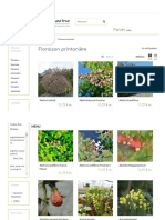 Plantes à Floraison Printanière - Hortimarine