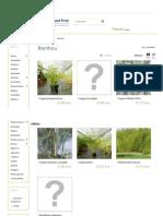 Le Bambou Non Traçant, Une Plante Idéale Pour La Haie - Hortimarine