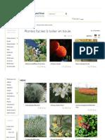 Plantes Faciles à Tailler en Boule - Hortimarine