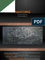 anatomie schéma-commentaire.odp