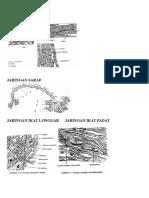 Gambar struktur hewan.doc