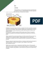 Estructura Y Formacion de La Madera