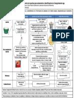 Flujograma Procesamiento Muestras Campylobacter