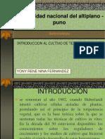 Culltivo de Tejido Vegetal UNA - PUNO