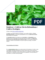 Sembrar y Cultivar Stevia Rebaudiana