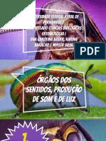 Órgãos dos sentidos dos insetos