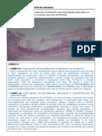 Patologia APS