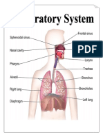 Parts & Function of Respiratory System