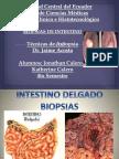 Intestino Delgado y Colon Tecnicas de Autopsia