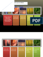 remedios florales por clasificacion.pptx