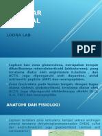 Kelenjar Adrenal- Lodra Lab