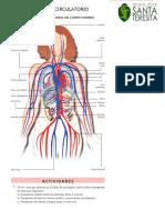 Ficha de Sistema Circulatorio